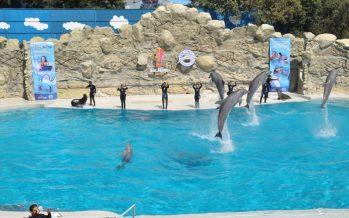 Prohibe la Asamblea Legislativa los delfnarios en la CDMX