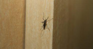 Seguro Social llama a acudir al médico ante síntomas de dengue