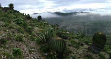 Huellas de dinosaurios en la Reserva Tehuacán-Cuicatlán