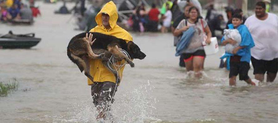 El agua baja en Houston, pero sube el número de muertos