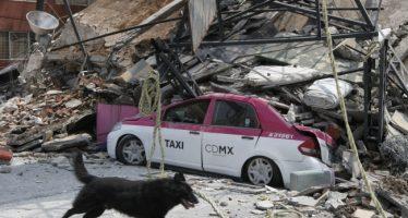Entran binonios caninos a edificio derrumbado de Chimalpopoca y Bolívar