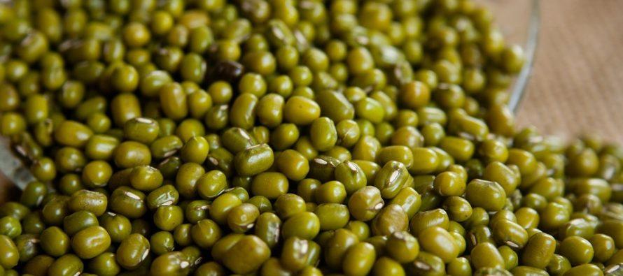 Cultivo de frijol soya resolvería déficit de oleaginosas en México