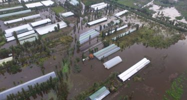 Fuertes lluvias dañan producción de planta de ornato en Xochimilco