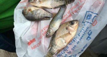 Llovieron peces en Tampico