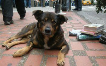 Aumenta cifra de perros abandonados en el Metro