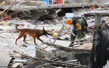 Perros rescatistas, los héroes que salvan vidas tras el terremoto