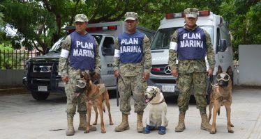 Mantiene Marina acciones de búsqueda y rescate en la CDMX