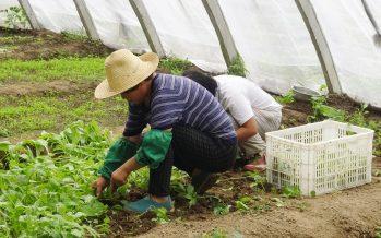 Radiografía de la servidumbre y el trabajo forzado en México