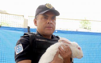 Liberan, en hábitat natural, a 50 conejos dañados por sismo
