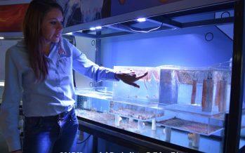Laboratorio Submarino Blau Life complemento del Acuario Inbursa en la Ciudad de México