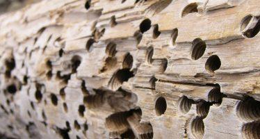 México impide ingreso de madera de EE.UU con plagas