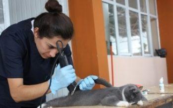 Esterilización de mascotas reduce riesgo de enfermedades