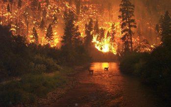 Bomberos luchan por controlar incendios en California