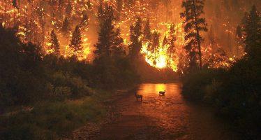 Incendio en California alcanza proporción histórica