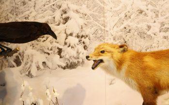 """¡Empieza el 2018 de Fábula en el Museo de Historia Natural! """"El Cuervo y El Zorro"""""""