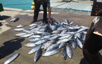 Inicia temporada de pesca de atún en Océano Pacífico