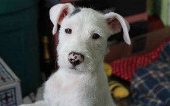Protección Civil: Proteger a las mascotas ante clima frío