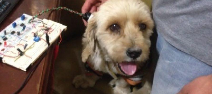 Crean dispositivo no invasivo para medir pulso a mascotas