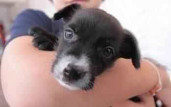 Domingo de adopción canina en la Glorieta de Insurgentes