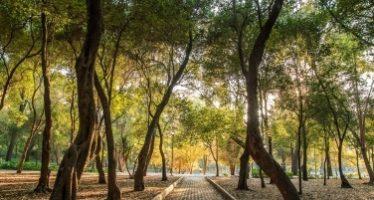 Los bosques mejoran salud mental y previenen enfermedades
