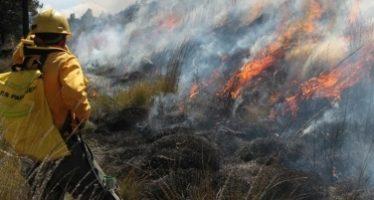 Controlan 55 por ciento de incendio forestal en Sierra Norte de Oaxaca