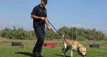 Perros policías encuentran marihuana en compresoras