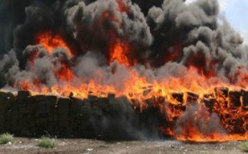 Incineran más de ocho toneladas de narcóticos en Baja California