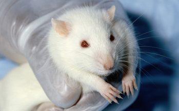 Experimentación con animales, una discusión en bioética