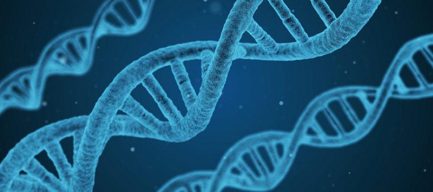 Identifican gen clave para controlar el cáncer
