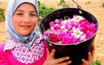 "La Rosa Damascena: la ""reina de las flores"""