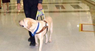 Perros de asistencia, dan alas a personas con discapacidad