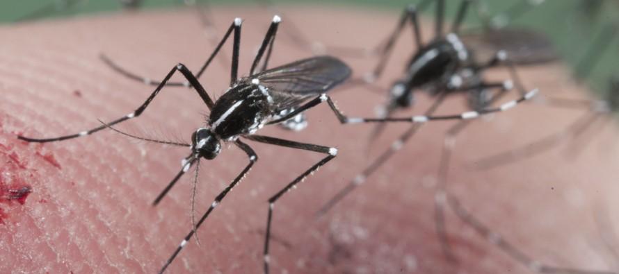 Se puede reducir genéticamente la población de mosquitos para combatir el zika, revela estudio