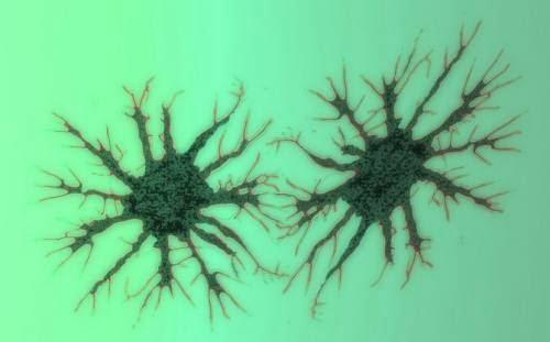 Resultado de imagen para Científicos revelan cómo el cerebro 'predice' el futuro