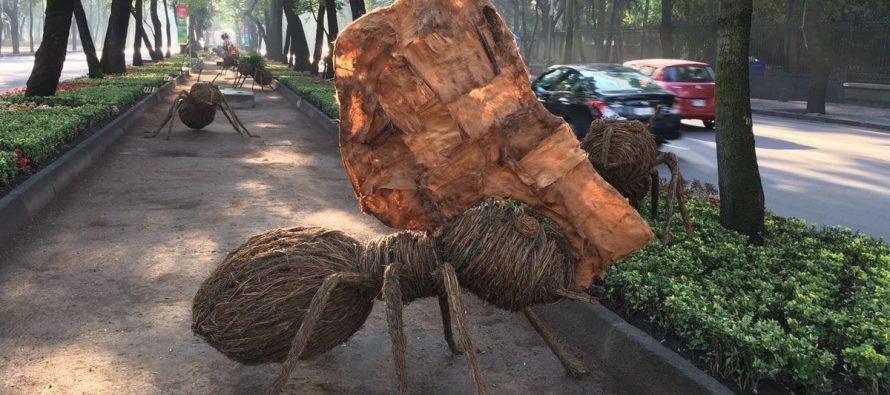 Hormigas gigantes se apoderan de Paseo de la Reforma