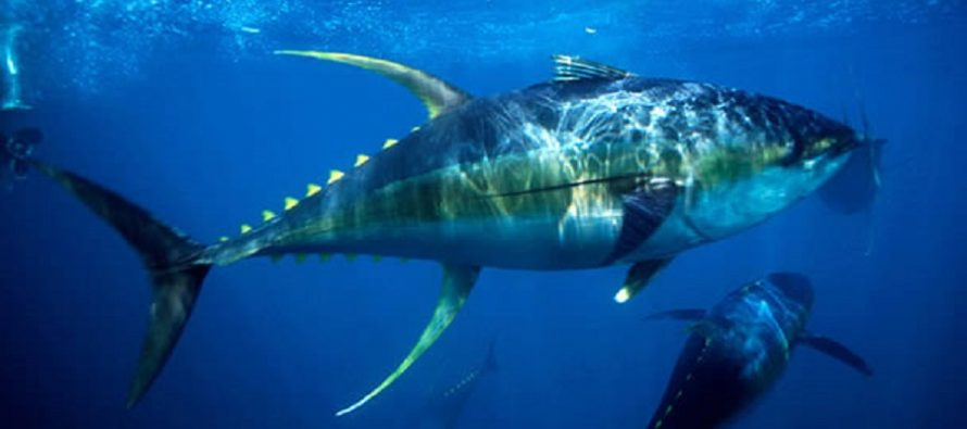La OMC autoriza a México sancionar a EU por afectar a productores de atún