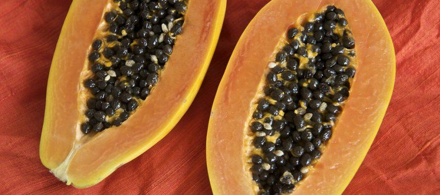 Prematuro decir que papaya mexicana causa salmonela en EU