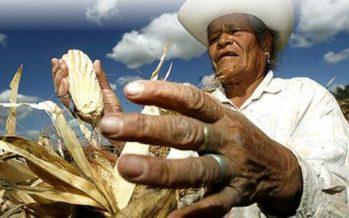 TLCAN condicionado, tiro de gracia para el campo mexicano