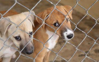 SEDEMA recibe donaciones de alimento para mascotas