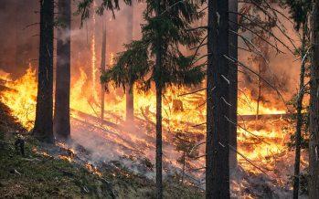 Incendios en California dejan 17 muertos y miles de desplazados