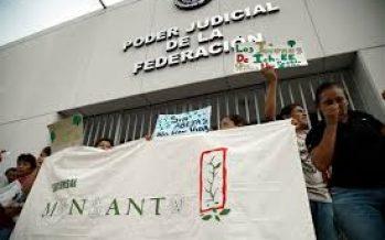 Juez de Campeche: encargado de vigilar la consulta sobre la soya transgénica