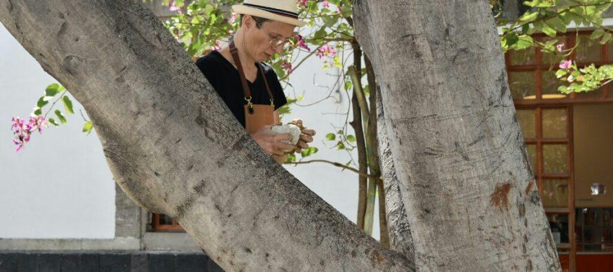 Arbolea, convivio de arte y ciencia bajo los árboles. Una experiencia única