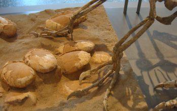 Encuentran 'nido' de huevos de dinosaurio de 130 millones de años