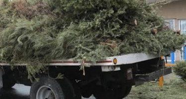Delegación Iztapalapa cambia árboles de Navidad por plantas