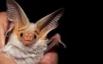 México proyecta su primer santuario de murciélagos