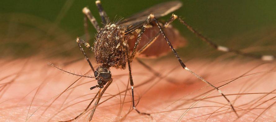 OPS reporta alza en casos de malaria