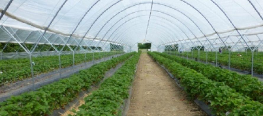 UNAM desarrolla secadores solares de plantas medicinales