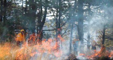 Bajaron 18 por ciento los incendios forestales en enero