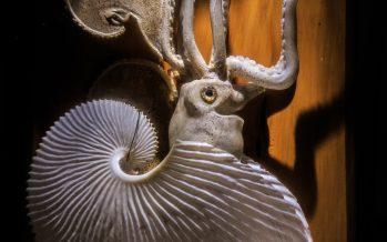 El Museo de Historia Natural tiene presencia en la XXXIX Feria Internacional del Libro del Palacio de Minería a través de una muestra de la biodiversidad de los océanos.