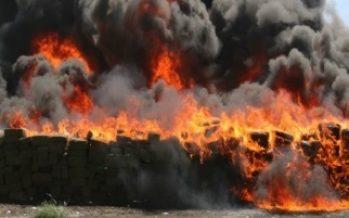 PGR destruye siete toneladas de mariguana en Tamaulipas