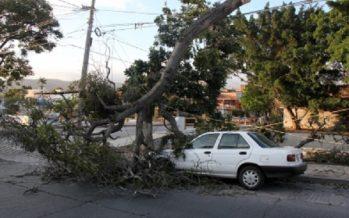 Fuertes vientos derriban árboles en la capital